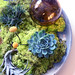 moss, succulent, and air plant centerpiece, Compai Style