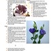 Lisianthus  Notes Pg 3 of 3