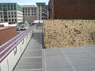 Initial South Wave Planting | by Landscape Architects