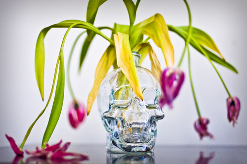 Skull & Tulips | by Michael Caswell