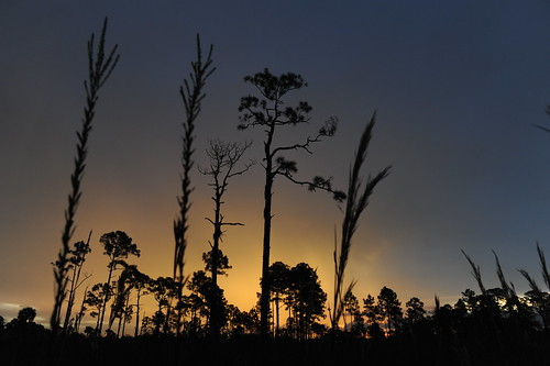 Sunrise at Florida Panther | by USFWS/Southeast
