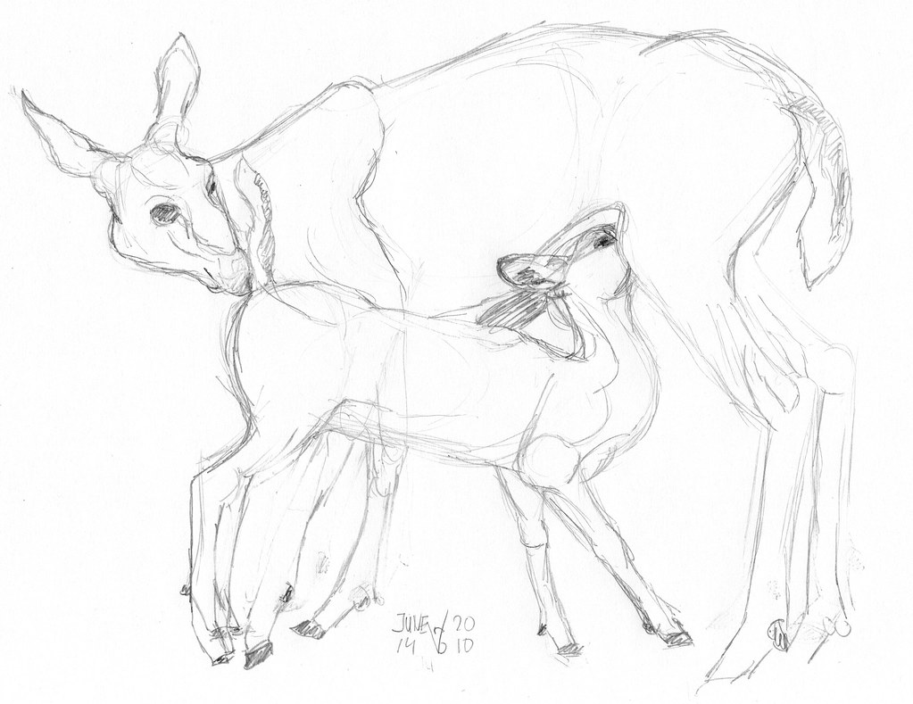 mother deer nursing her fawn by aaipodpics