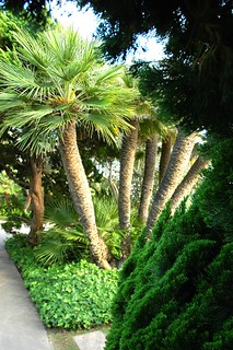Funny palms from around the bend, Meditation Garden - Self-Realization Fellowship, Encinitas, California, USA | by Wonderlane
