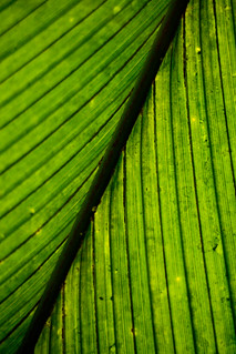 Big Palm Leaf | by Mason Sklut