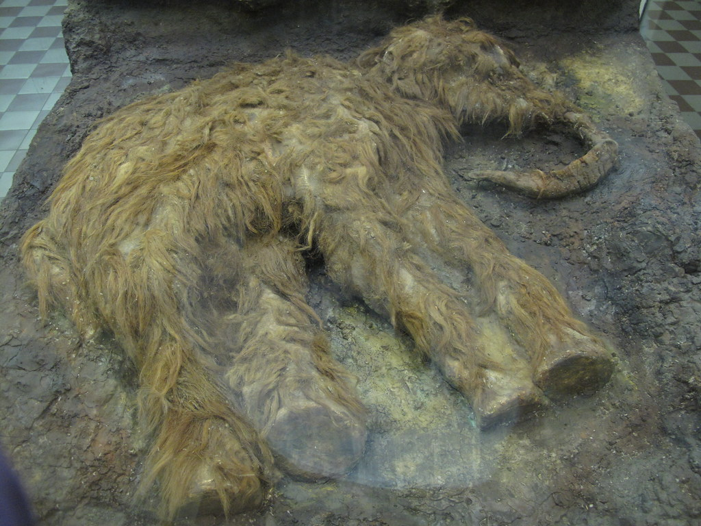woolly mammoth! | Flickr - Photo Sharing!: flickr.com/photos/saraewood/5165824991