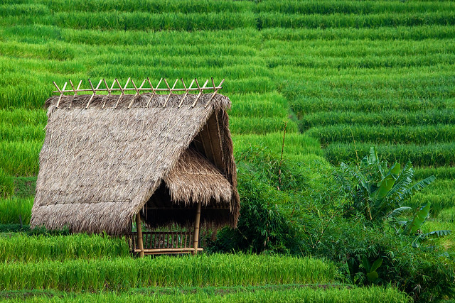 Small thatched hut a small hut in between rice paddies for Small garden huts