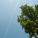 Plane trails over green trees in summer