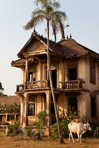 1930 39 S Abandoned French Colonial Villa With Cow Kandal P