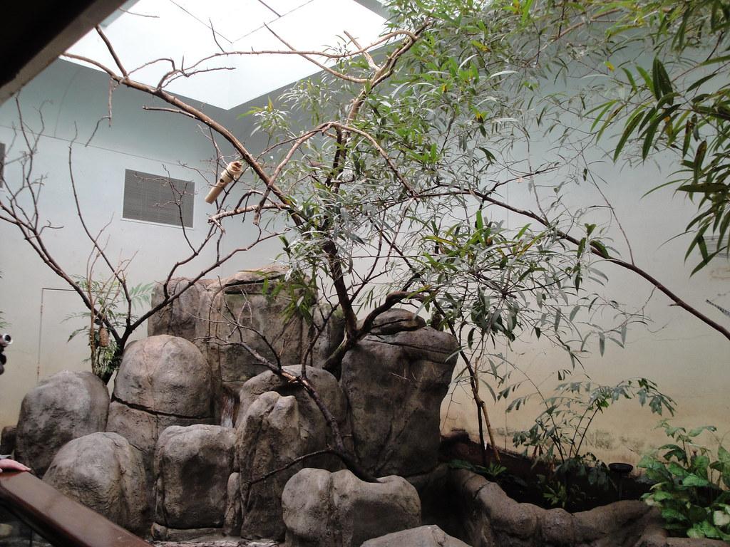 toledo zoo elephant house aviary fkalltheway flickr toledo zoo elephant house aviary by fkalltheway