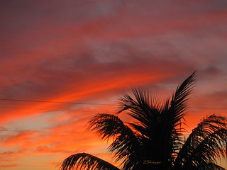 April ! Miami ! Sunset | by Blanca Rosa2008 +3,900,000 Views Thanks to All
