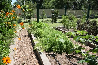 Urban Harvest Tour - Turning Point - Raised Beds Beneficials and Vegetables | by jbolles
