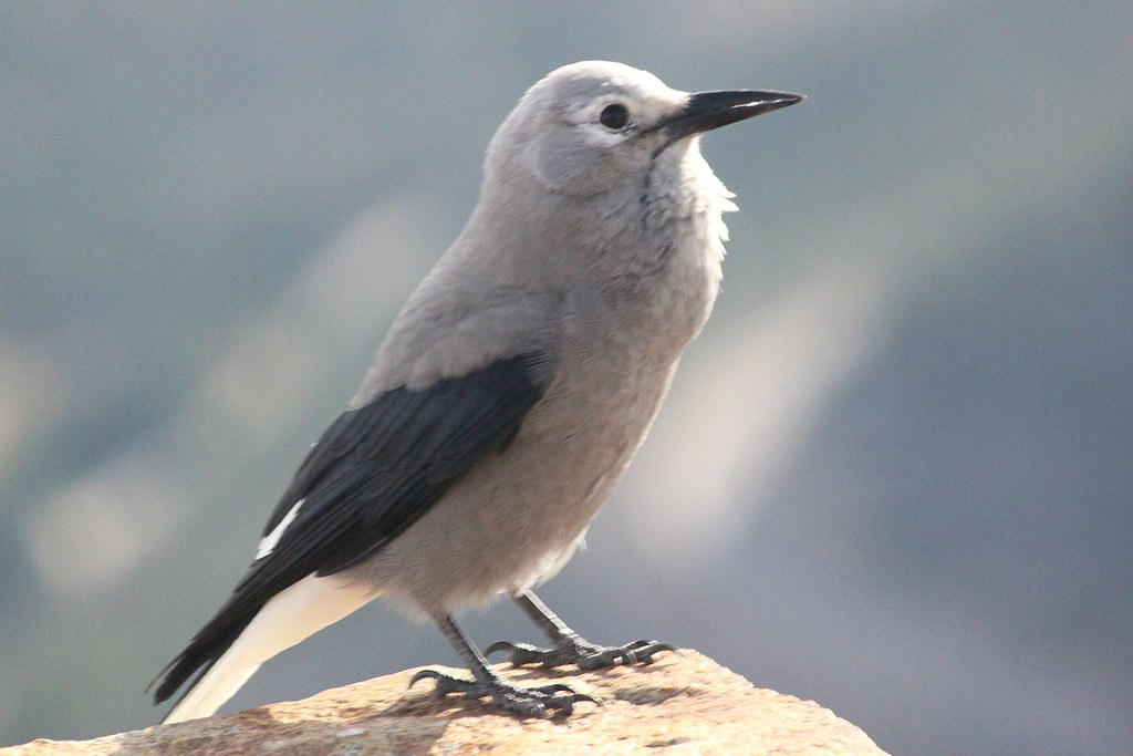 A bird in Rocky Mountain National Park in northern Colorad ...