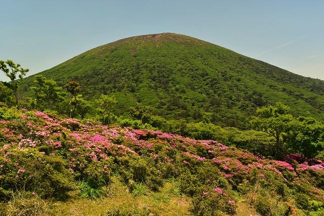 ミヤマキリシマと韓国岳