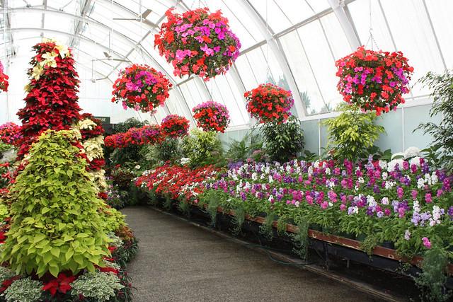 ... Indoor Display At Christchurch Botanic Gardens | By Rexness