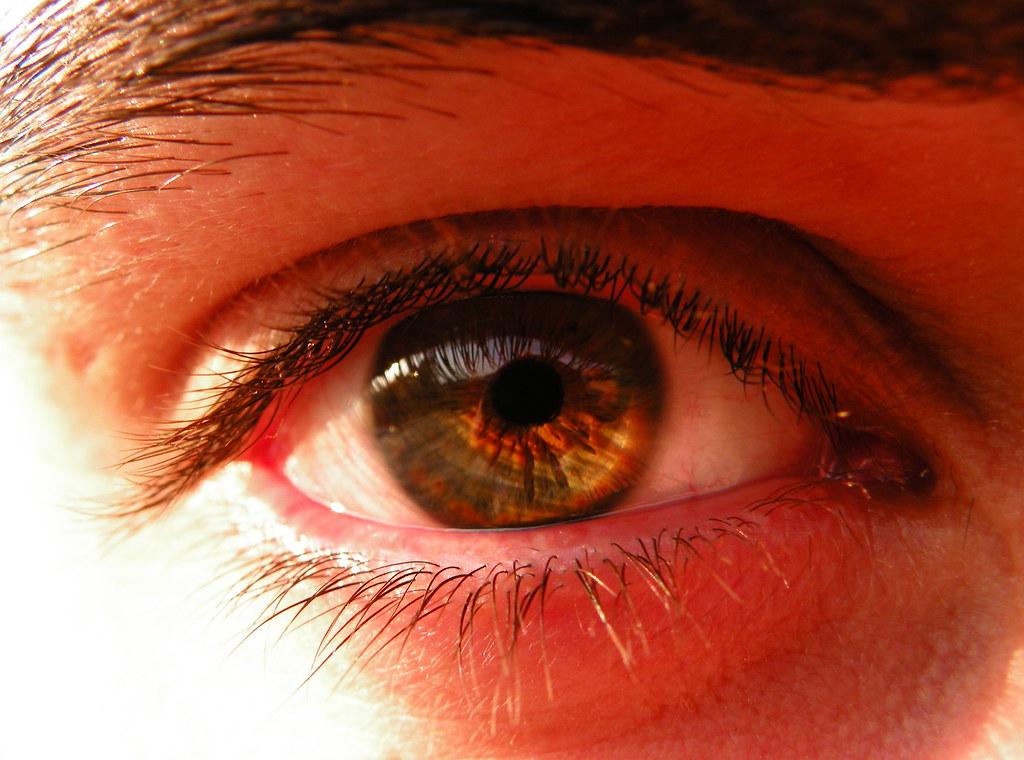 ojo pardo | lindo ojos de mi Gonza..... sus colores pardos ...