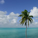 Coconut Palm Tree - ocean, sky, and clouds