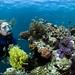 Philippine reefscape I