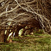 Trees_Background 39
