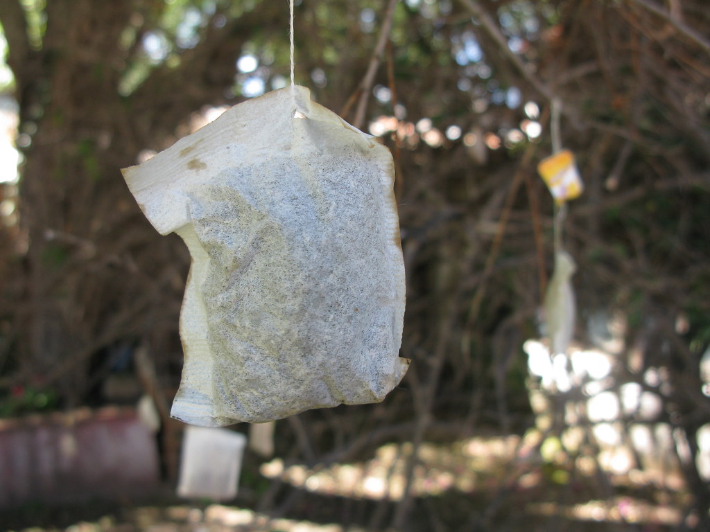 tea bags hanging from trees = art! | www.guapamacataro.org ...