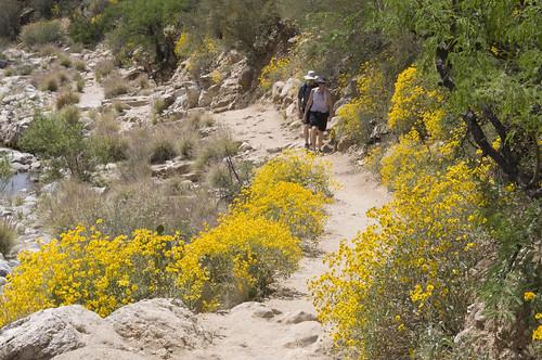 wildflower corridor