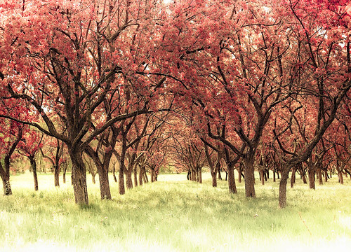 The Orchard | by raceytay {I br♥ke for bokeh}
