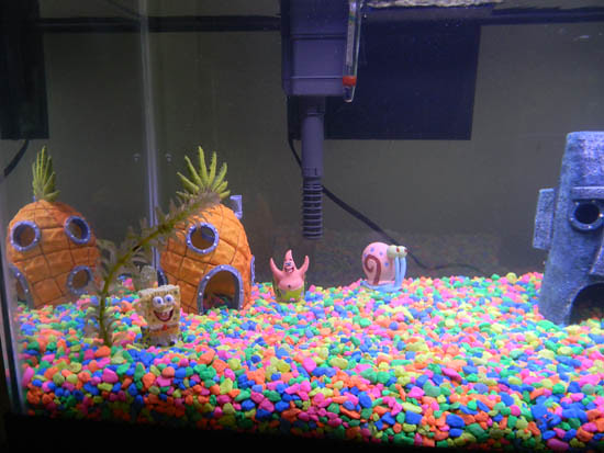Aquarium Spongebob : SpongeBob Aquarium 01 20 gallon long tank for goldfish. Ra ...