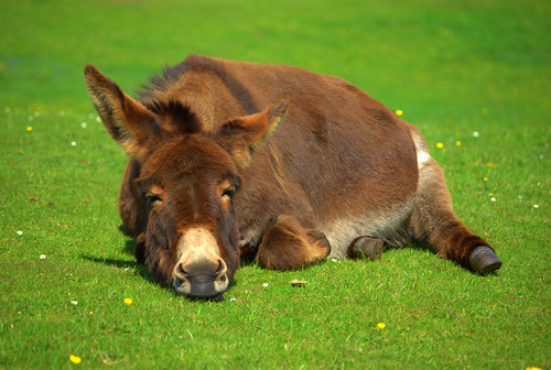 Donkey | by TheFlyingGerbil