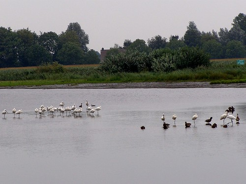 Touring around - how a bad weather day can be nice - birds on a grey day | by nilliske