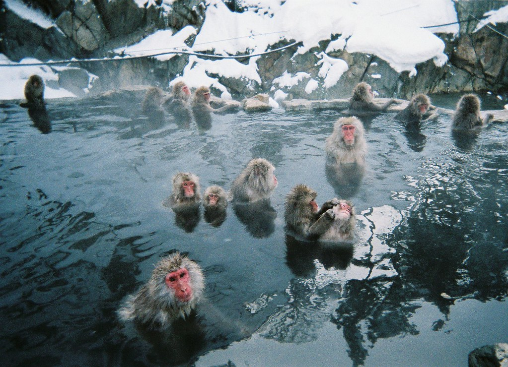 Hot Spring Monkeys Nagano Japan Japanese Macaques Nihon Flickr