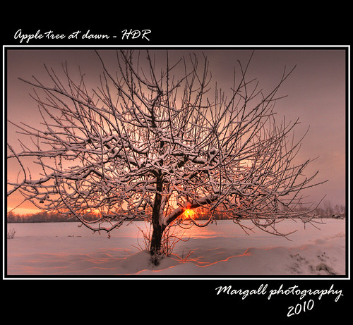 Apple tree at dawn - HDR | by Margall photography