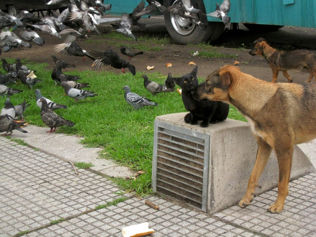 Dogs, Pigeons & Black cat | by blmurch