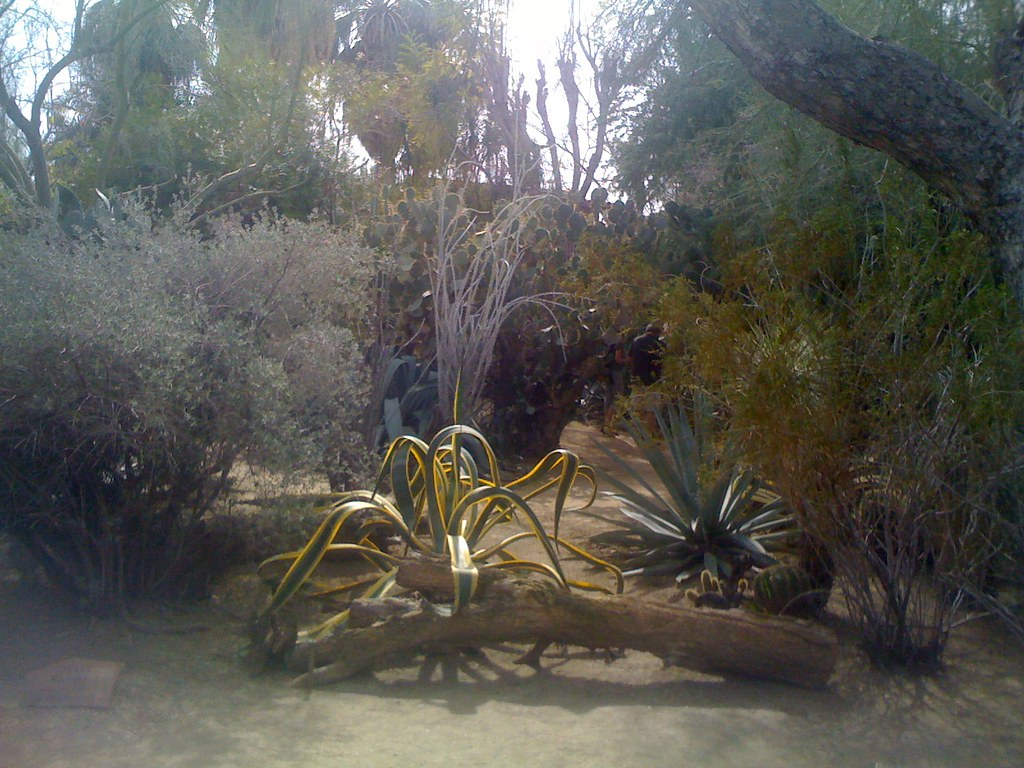 Moorten Botanical Garden Palm Springs More On Flickr