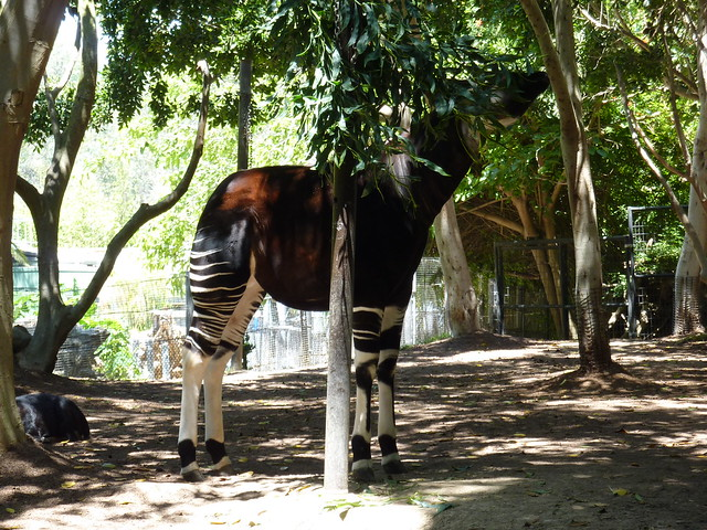 Half Horse, Half Zebra Type Creature | Flickr - Photo Sharing!