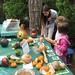 Harvest Workshop