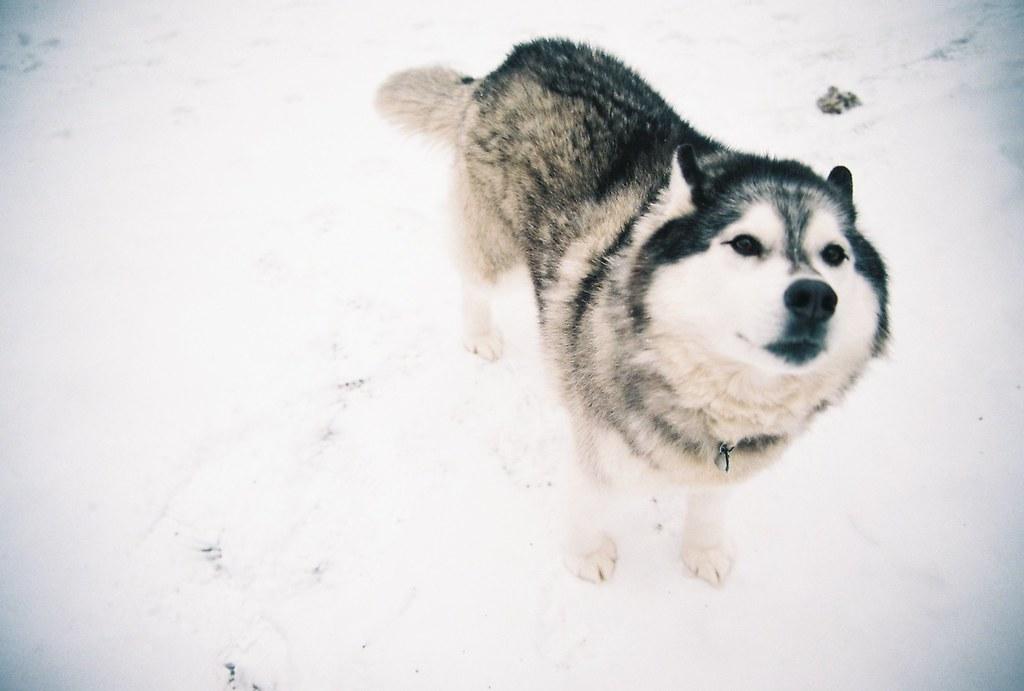 Moon Moon Dog Breed