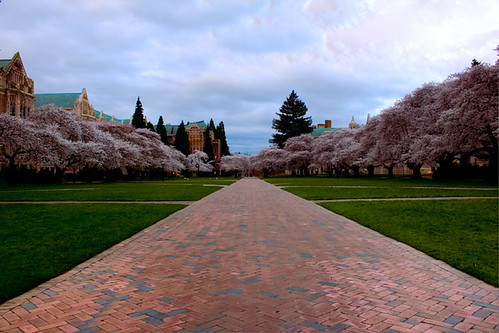 2010 UW CHerry Blossom - Follow the brick road! | by johncuthbert43