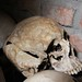 Skull, With Machete Cut