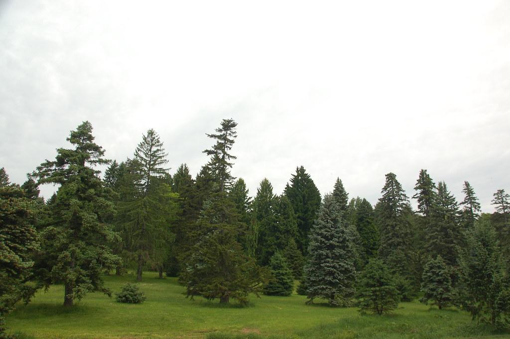 Arnold Arboretum, 18 M...