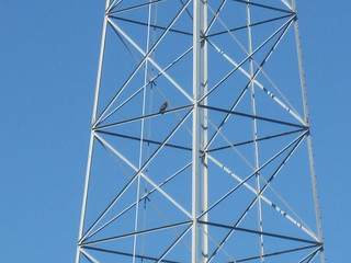 Red tailed hawk on a pylon | by Liz Henry