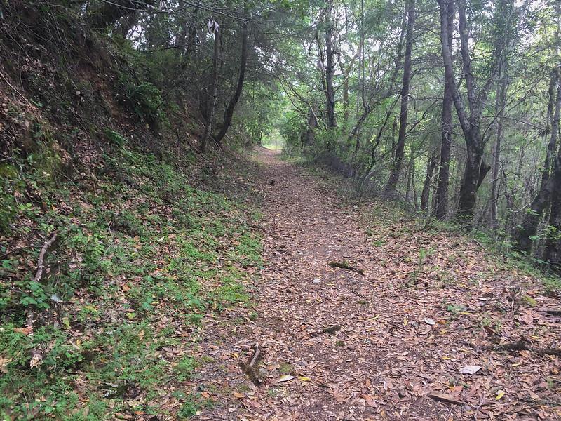 Nutmeg Trail (D)