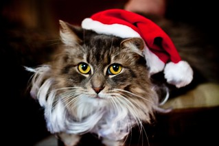Santa Cat | by Cakefarm