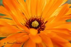 Flower by PrincesS_Shahad