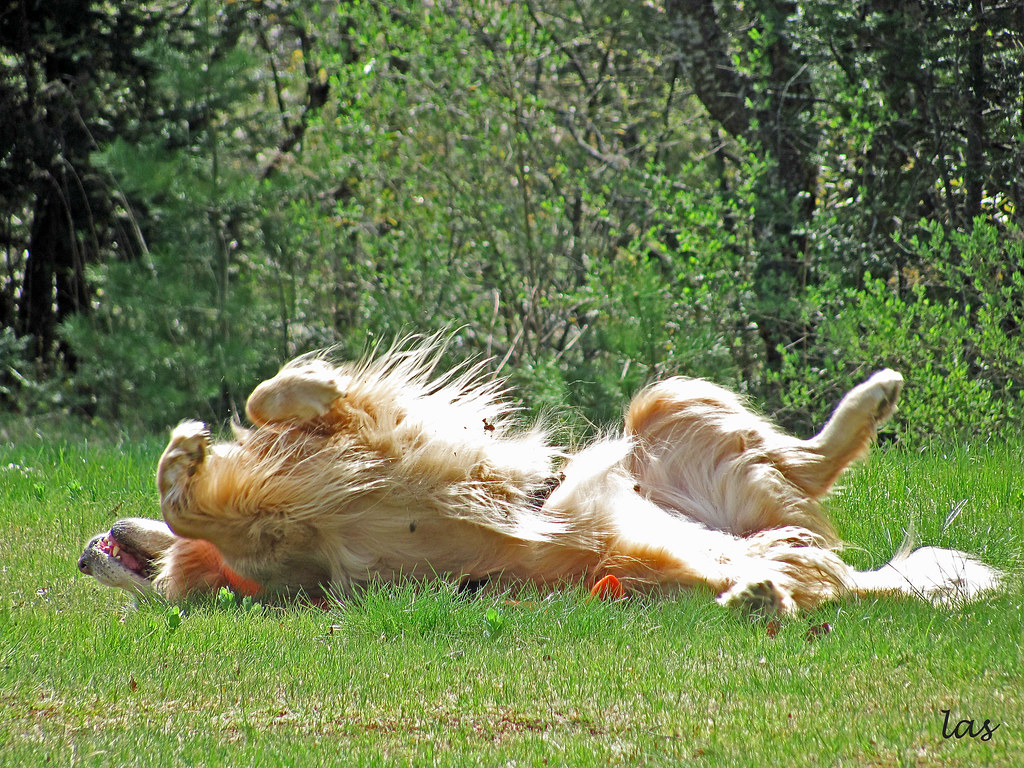 Image Result For Dog Training Shelby