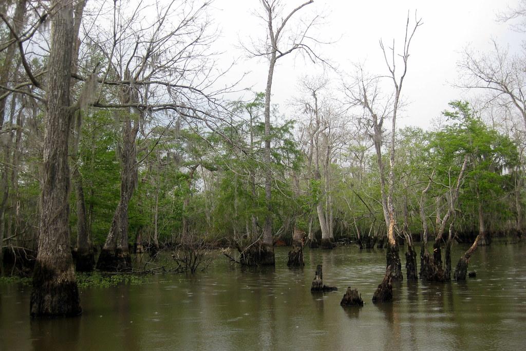 Swamp Boat Tours Near Myrtle Beach Sc