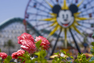 Mickey in Paradise (Explored) | by andy castro