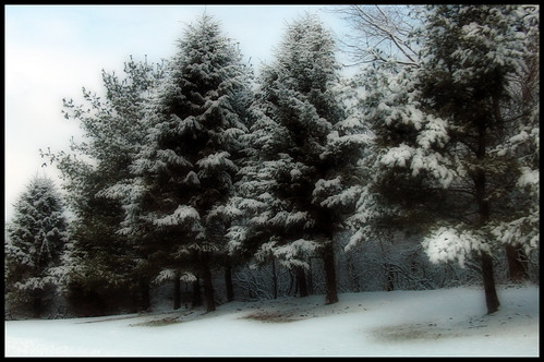 Snow Clings | by pixpanache