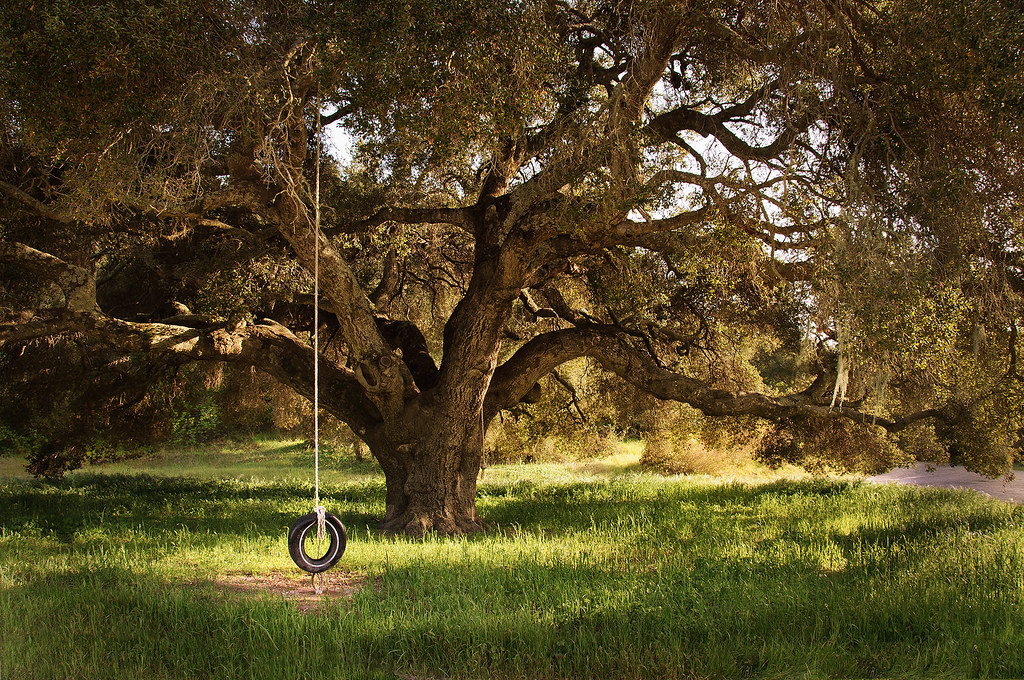F And F Tire >> Tree Swing 365:71 | 3/20/10. California Oak trees make for v… | Flickr