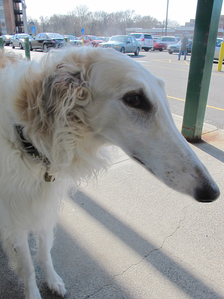 Dog Breeds With Long Snouts