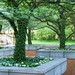 Garden at the Art Institute