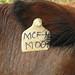 cattle-farming-mcf-ear-tag